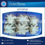 Frozen Baby Octopus (Octopus Ocellated) for Sale