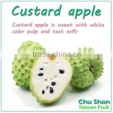 Fresh Custard Apple with best price