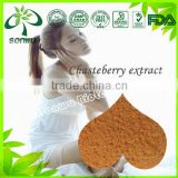 Chasteberry extract/Holy blackberry powder