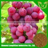 100%High quality powder grape seed extract bulk purchase/pure powder grape seed extract with nice service Completely Good !