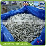 IQF frozen new products smelt silver fish