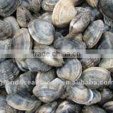 Frozen Short Neck Clam,IQF
