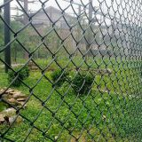 Africa Farm pvc coated diamond wire mesh fence wholesale