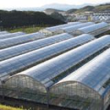 PE Greenhouse Film