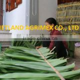 Dry big size Bamboo Leaves