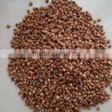 Well choose red sorghum with highest qualtiy on hot sale