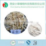 Natural Lily bulb extract / Lilium candidum bulb extract