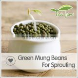 Inquiry about Sprouting grade green mung bean seed