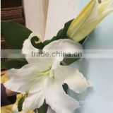lily flowers white fresh cut for blessing from Kunming