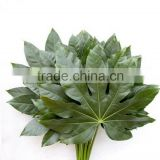 Diversified in packaging crazy selling wholesale flower cut foliage