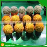 Wholesale Natural Artificial Plastic Cactus Plant