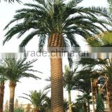 artificial palm tree indoor decoration house /hotel plastic palm tree canada