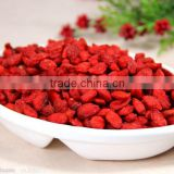 Dried Goji Berry/Wolfberry 2013 new product