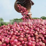 India's Best Product of Onion Oil