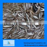 High quality fresh iqf pond smelt