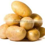 Chinese Holland Potato in Hot Sale
