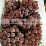 Chinese fresh fruits grape <b>yunnan</b> red grapes