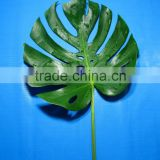 Fragrant aroma hot selling single cut foliage for cut flower