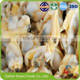 Health seafood Frozen Boiled Short Necked Clam Meat, IQF