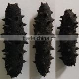 HOT!!! 100% Natural organic dried prickly sea cucumber