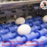 Egg Grading & Packing Machine for Poultry Farm