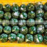 Frozen Best Cassava Leaf / Cassava Leaves from Vietnam