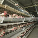 hot sale hot galvanized H type full automatic egg collector chicken cage for nigeria poultry farmchicken cage