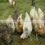 high quality low price PVC coated hexagonal chicken wire mesh from alibaba anping china supplier