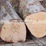 PINE SPRUCE BIRCH OAK ASH LOGS/TIMBER and eucalyptus timber wood logs/crude wood
