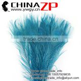 CHINAZP Leading Supplier Wholesale Cheap Full Eye Dyed Turquoise Blue Peacock Tail Feathers for Sale