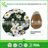 100% Pure Natural Chrysanthemum Extract