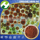 Haematococcus Pluvialis Whole Algae Extract Astaxanthin Supplement
