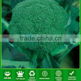 BR01 LJ no.1 60 days green hybrid broccoli seeds
