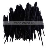 Touch of Nature goose feather, rooster feather, dyed colourful feather wholesale