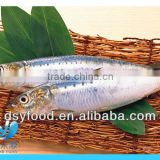 frozen fresh sardine fish for canned fish