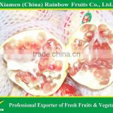 Chinese Fresh Pomegranate