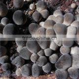Chinese High Quality Polish Wild Dried Straw Mushroom