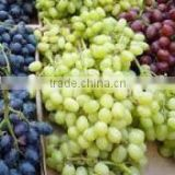 Grade A Fresh Red grapes, White grapes, Black grapes, Seedless grapes