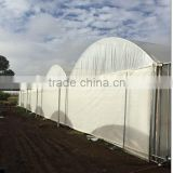 Europe 200 micro yellow color plastic film sheet cover for grape vineyard and greenhouse                                                                         Quality Choice