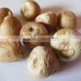 Dried Whole Betels Nuts, Split and Slice Betel Nuts 90-95% Good Cut (whatsapp: 0084 915 211 469) )