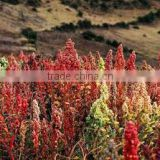 100.000 kg organic Quinoa excellent quality Direct from Andes Peru