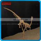 Dinosaur Skeletons Replicas for Indoor Exhibition