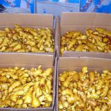Fresh Fresh Wholesale Organic Fresh Ginger Wholesale Organic Fresh Ginger Price Quality Ginger