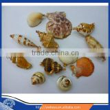 wholesale natural sea shell shaped pendant , shell pendant, jewelry findings mixed styles 100pcs/bag accept paypal