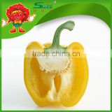 Bell Pepper/Color pepper black pepper 550gl/ 500gl