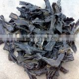 Dried Kelp raw material,dried laminaria,dry algae,all types of seafood dried seaweeds