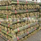 Structural Bamboo Stick