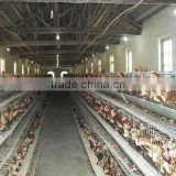 chicken poultry farming steel frame warehouse