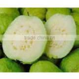 GOOD QUALITY Fresh White Guava