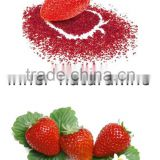 Organic Strawberry Powder Free Sample